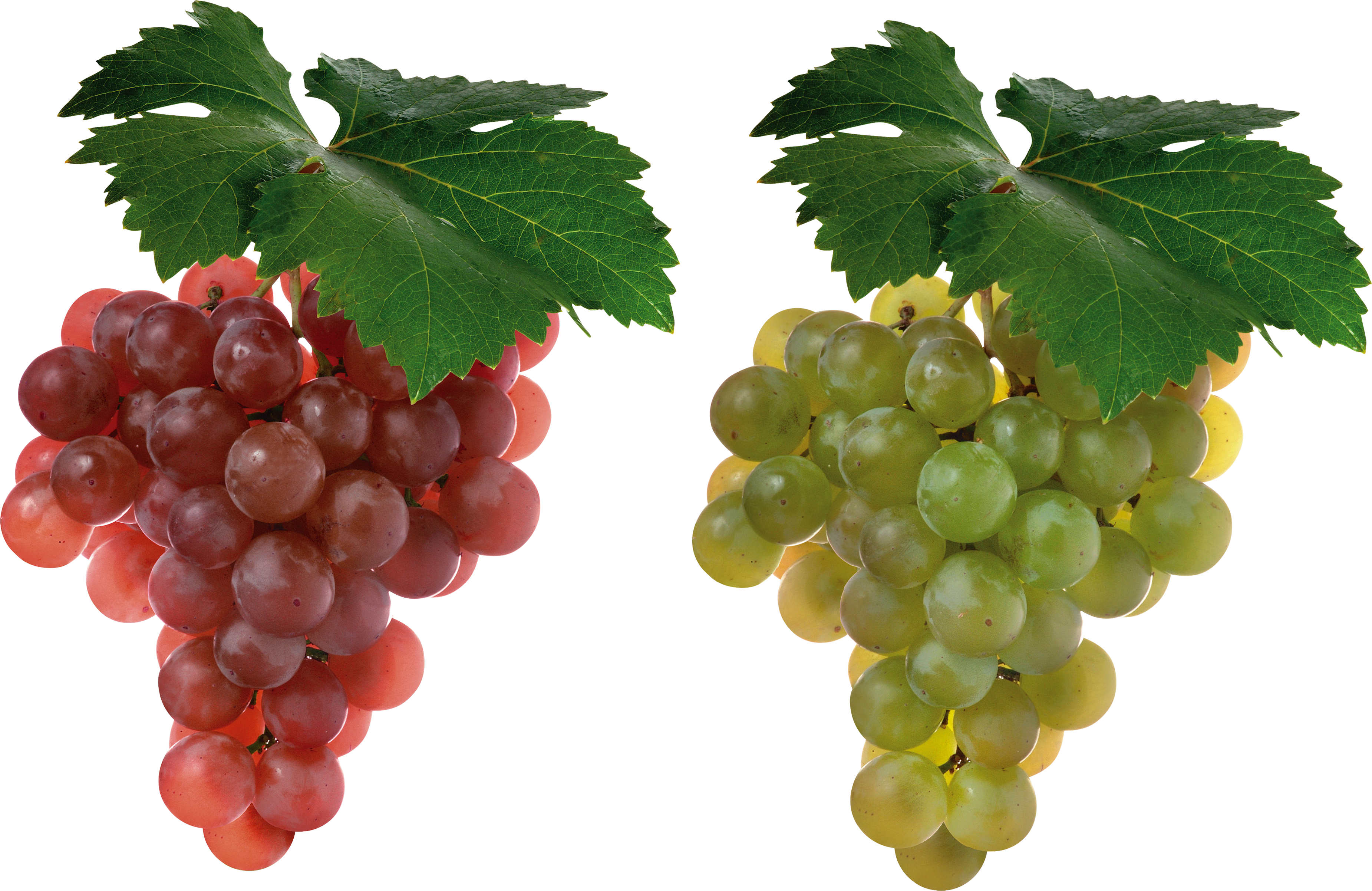 Transparent grapes isolated. Png image purepng free