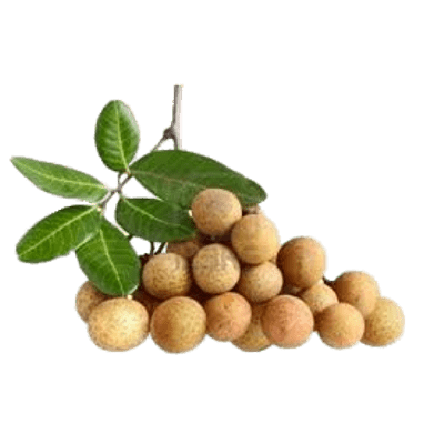 Fruits transparent longan. Fresh longans png stickpng