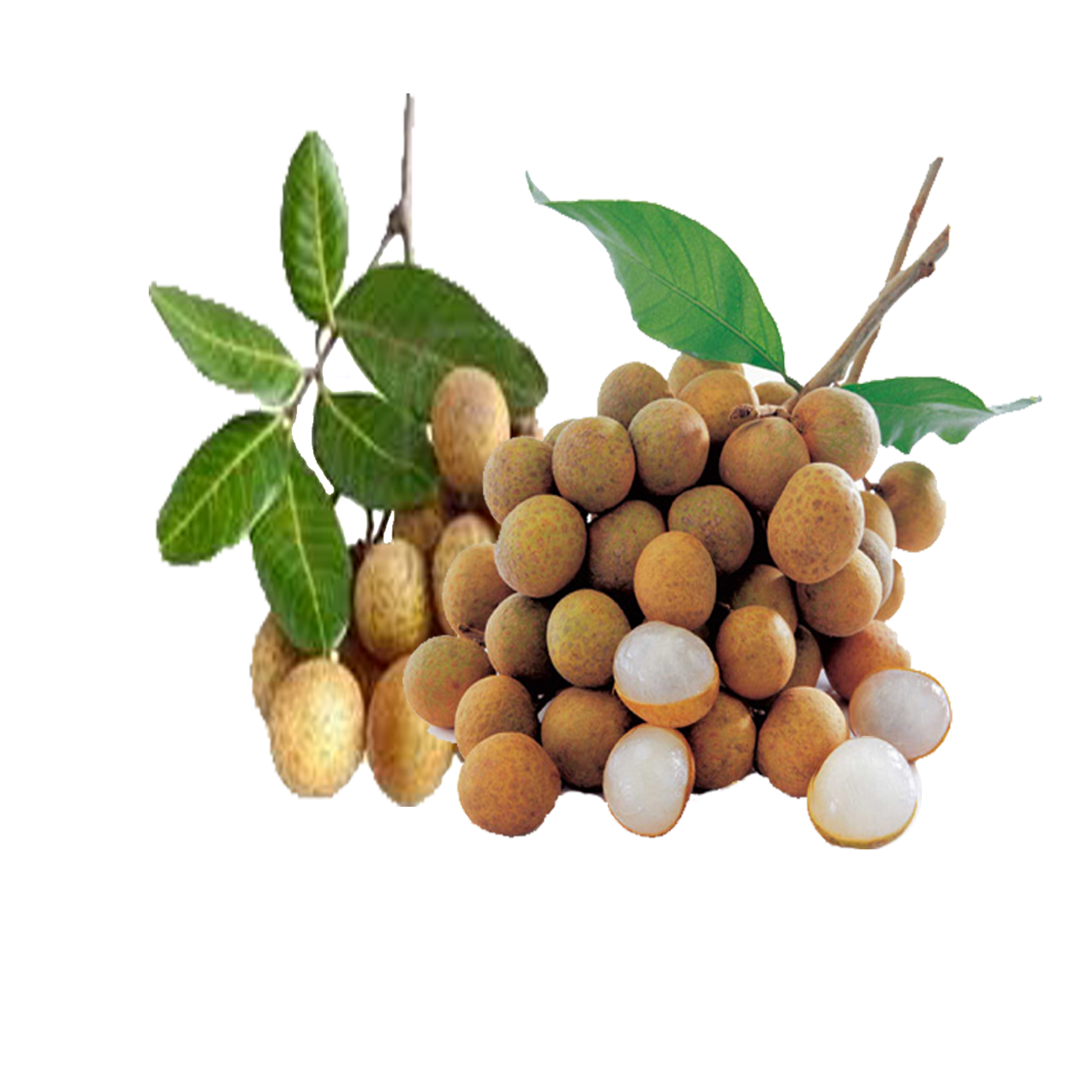 Fruits transparent longan. Natural agri products cooperative