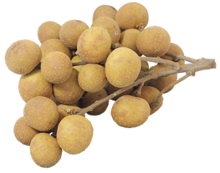 Fruits transparent longan. About fruit ii this