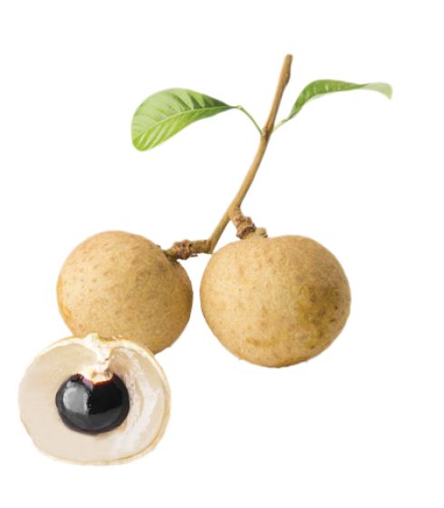 Fruits transparent longan. Tropical lbs sale