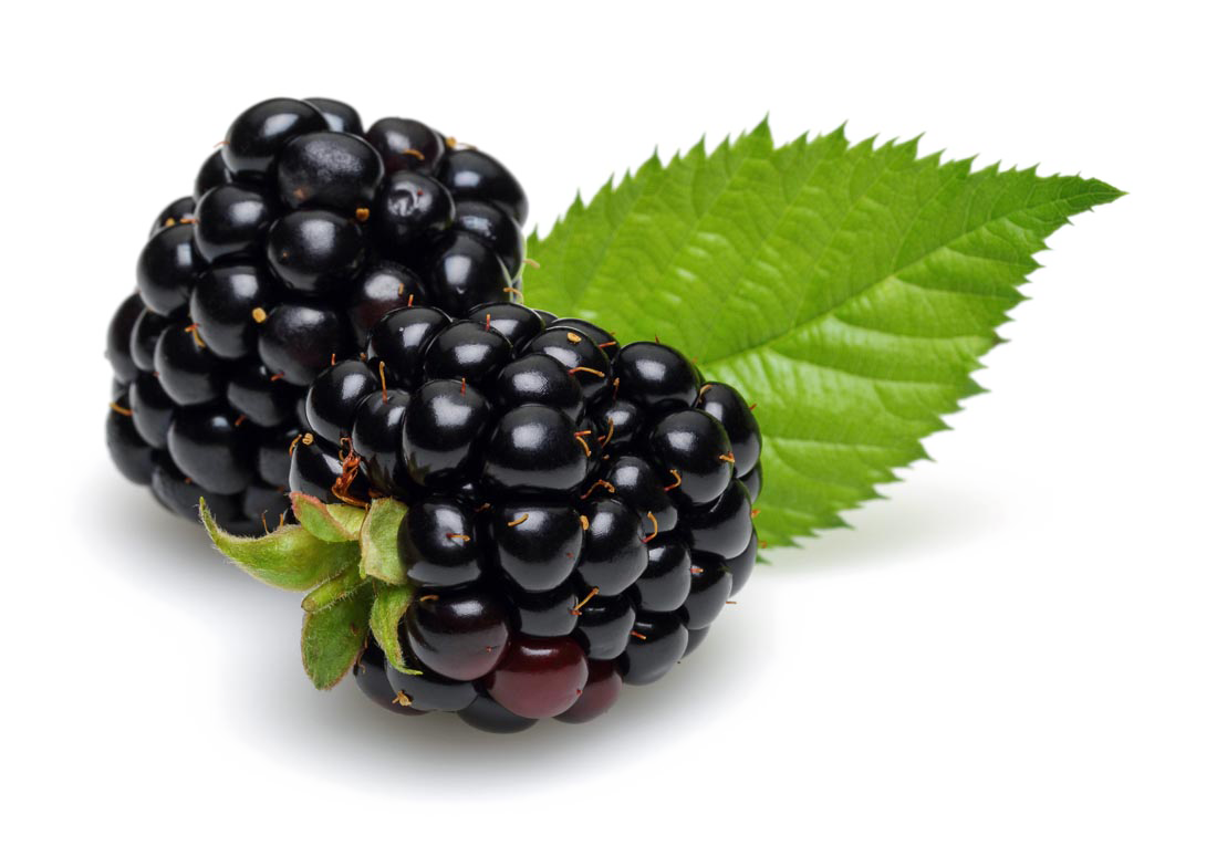 vector fruits mulberry