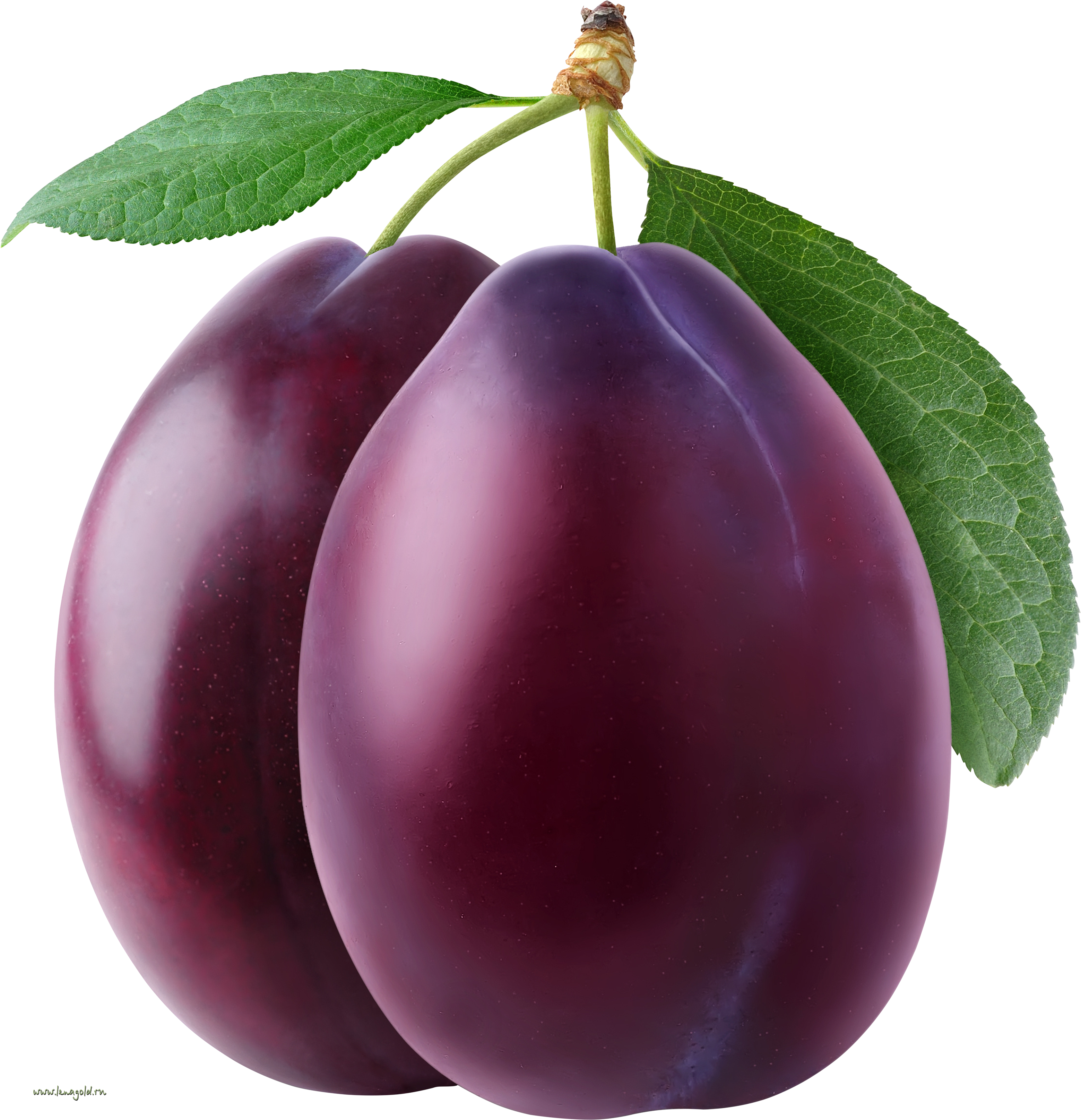 Free png plums transparent. Plum clipart violet royalty free library