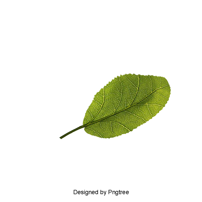 Full clipart banana leaf. Emerald green png picture