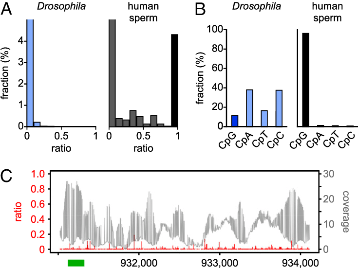 Function drawing drosophila. Characterization of the melanogaster