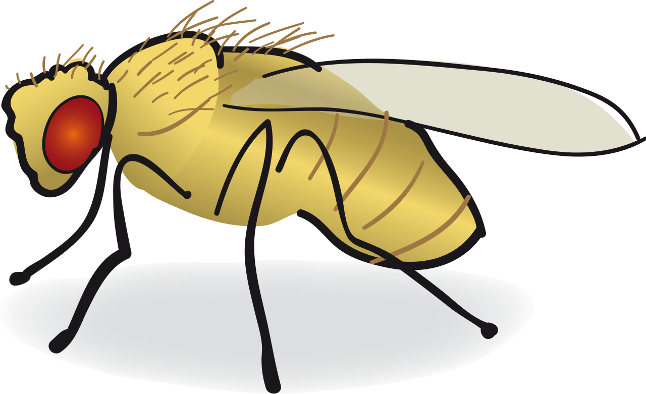 Put a bug in. Function drawing drosophila image royalty free stock