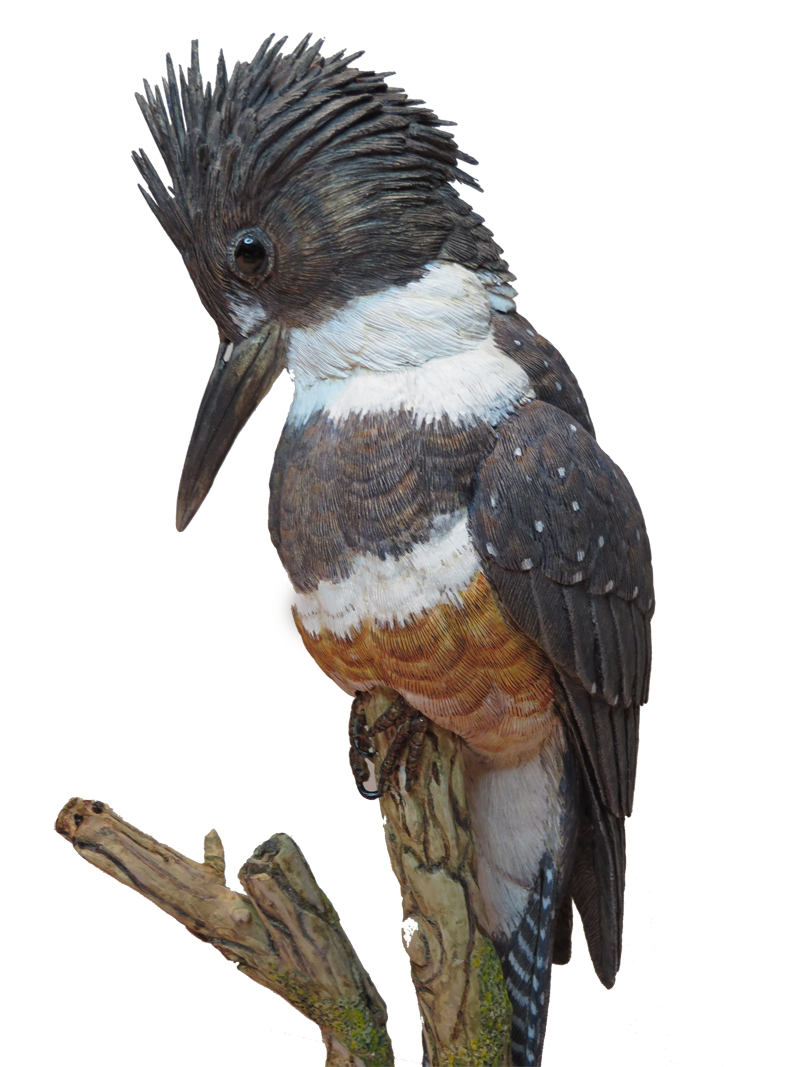 Function drawing kingfisher. Cutout png pixels carved