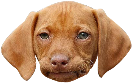 Dog face png. Funny