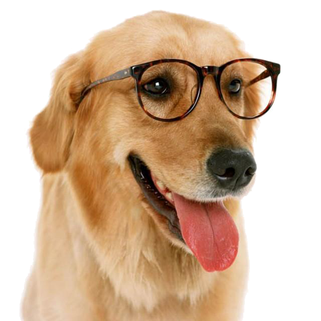 Funny dog png. With glass