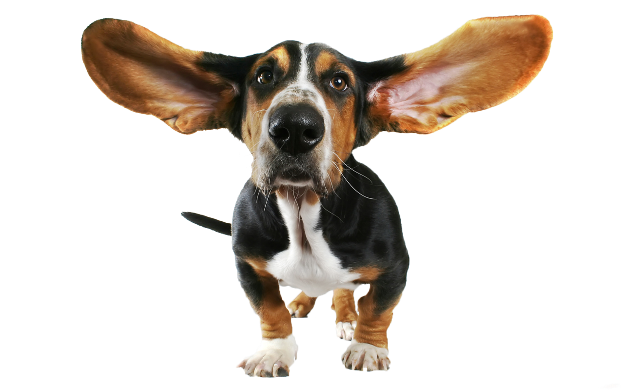 Dogs transparent png. Funny dog clipart gallery