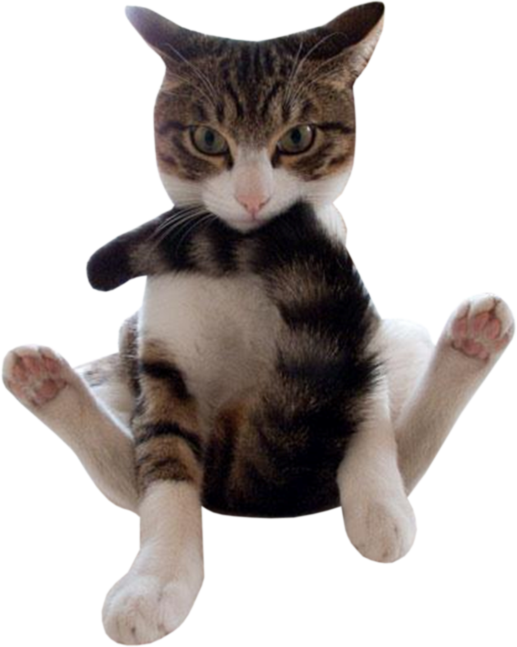 Funny animals png. Cat by northernstarimages on