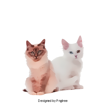 Vector cats ragdoll cat. Png images download resources