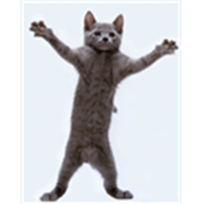 Funny cats png. Cat picture dancing roblox