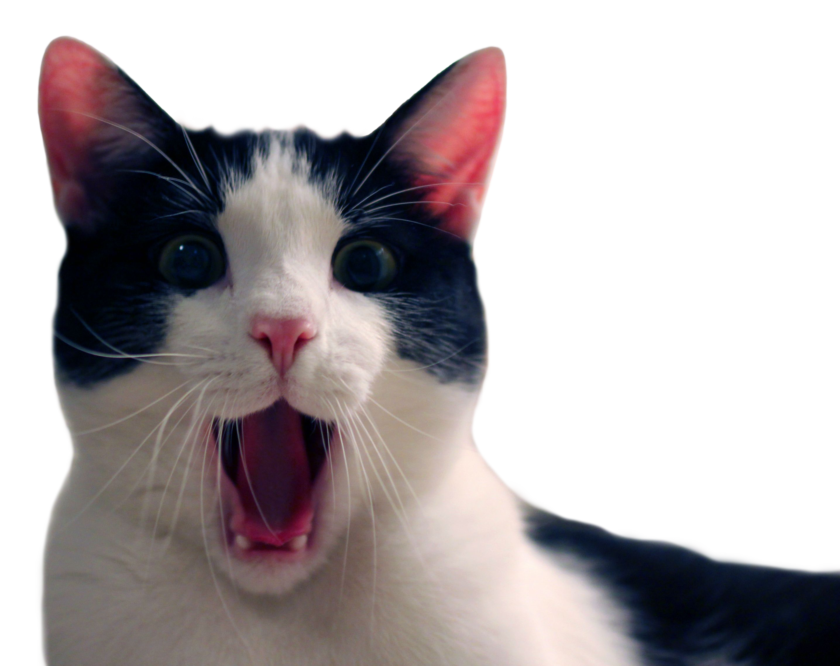 Funny cats png. Cat with very surprised