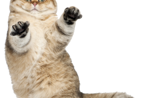 Funny cats png. Image related wallpapers