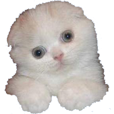 Funny cats png. Pics of funnycatspics twitter