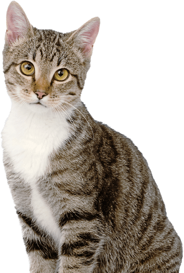 Funny cats png. Prettylitter is kitty litter