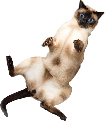 Funny cats png. Just some fabulous jumping