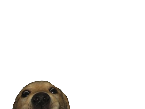 Funny dog png. Image about cute in