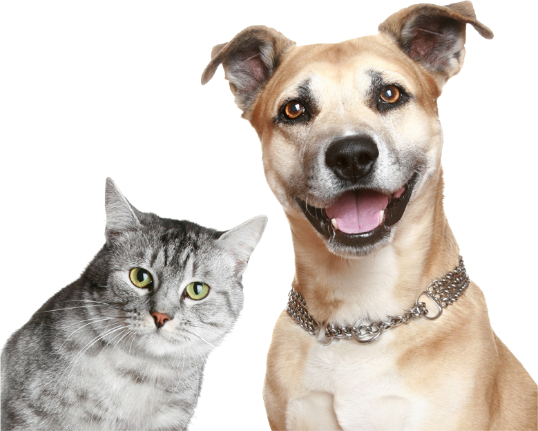Funny dogs png. About green natural pet