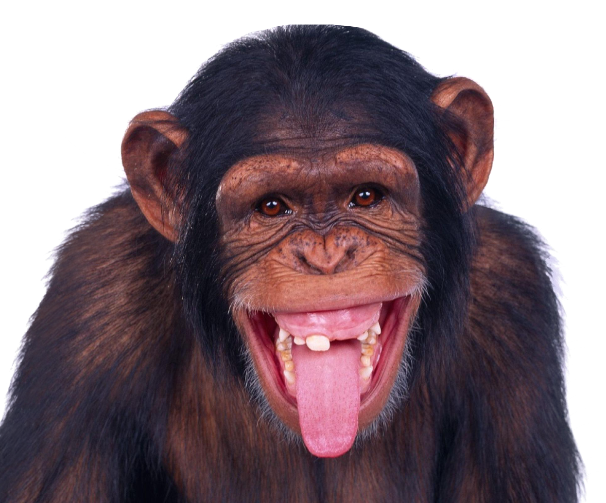 Image purepng free transparent. Monkey png images picture free library