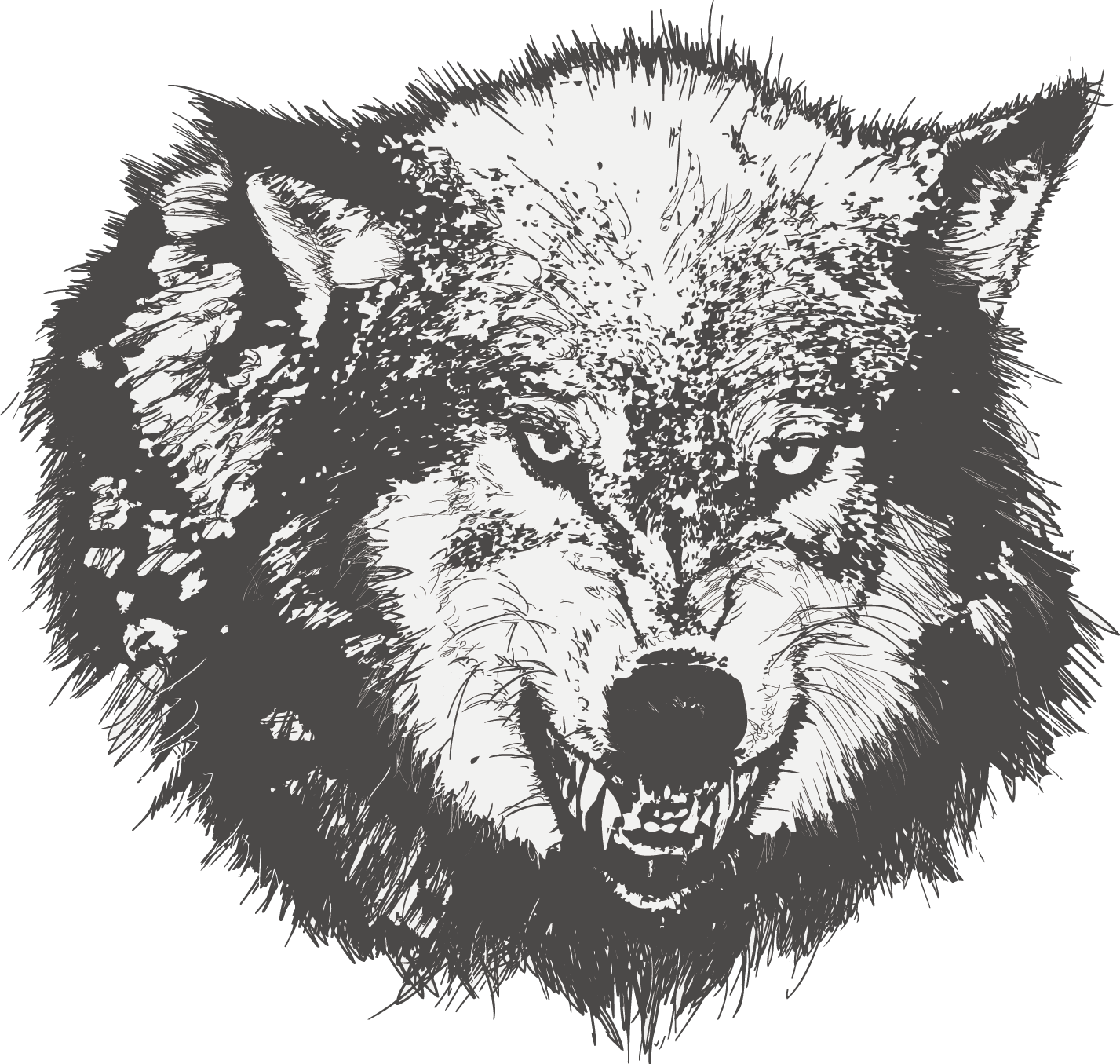 Vector fur wolf. Dog drawing black sketch