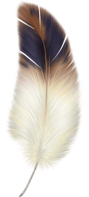 Fur vector bird feather. Png feathers and tattoo