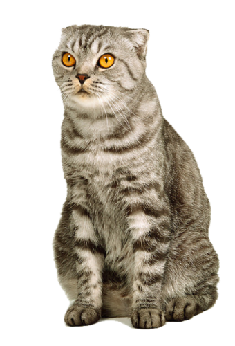 Furry cat png. Twenty four isolated stock