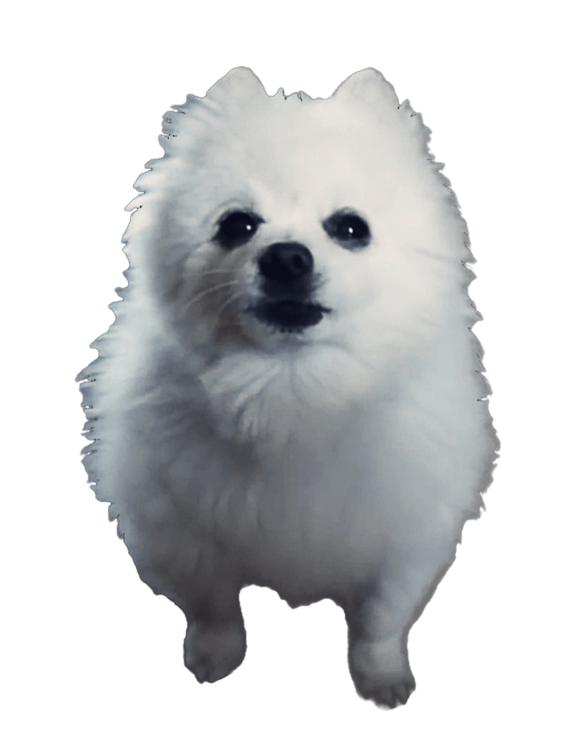 Image gabe the dog. Doggo transparent vector royalty free download