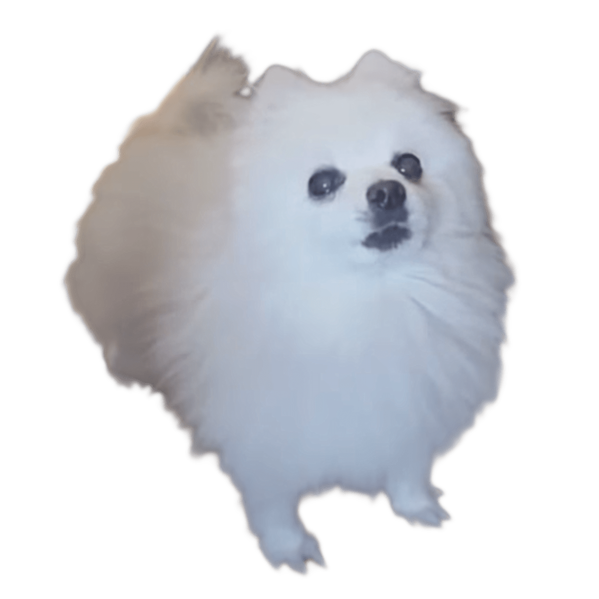 Gabe the dog png. Bork transparent stickpng download