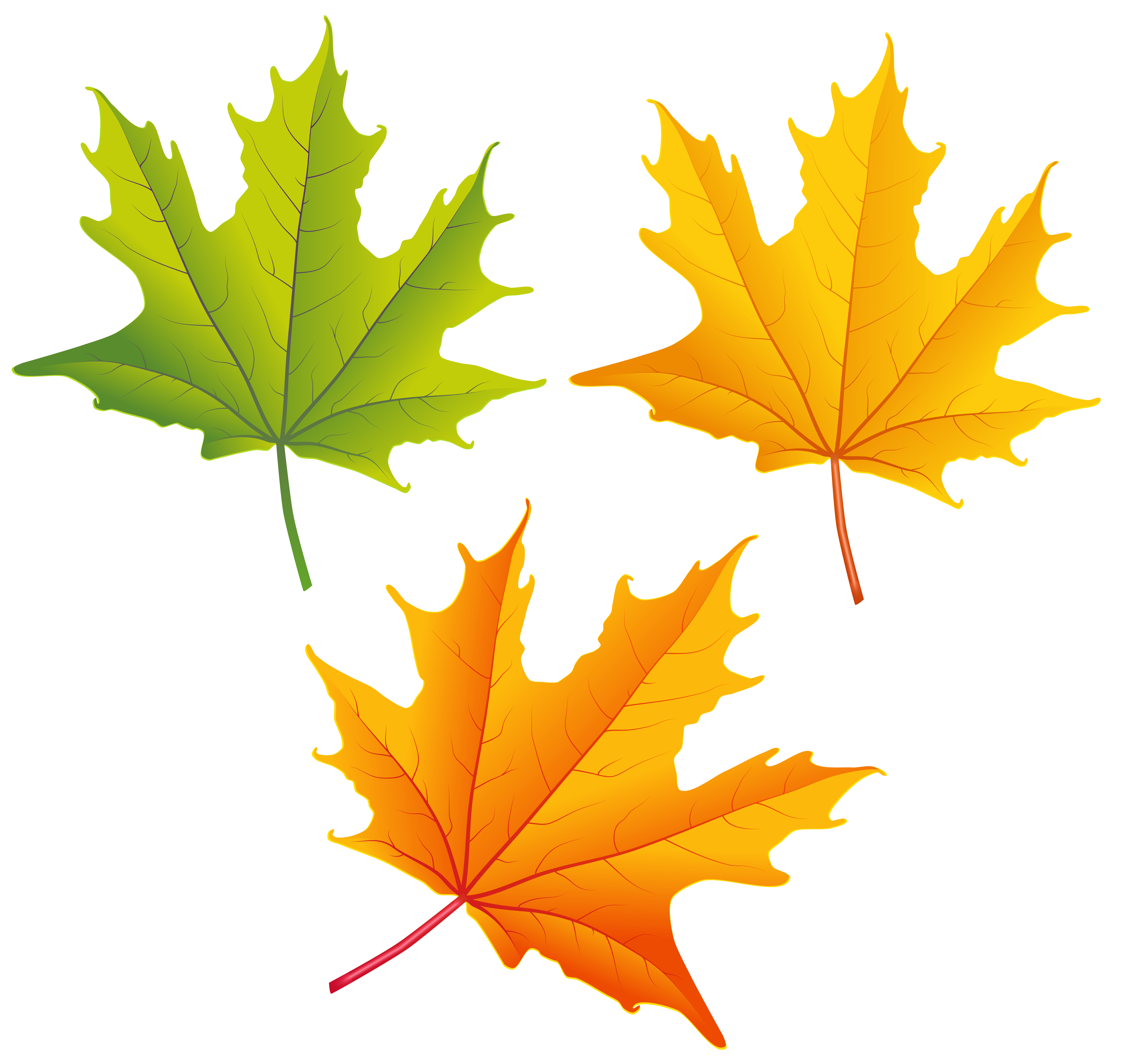 Fall leaves border labels png. Set of autumn clipart