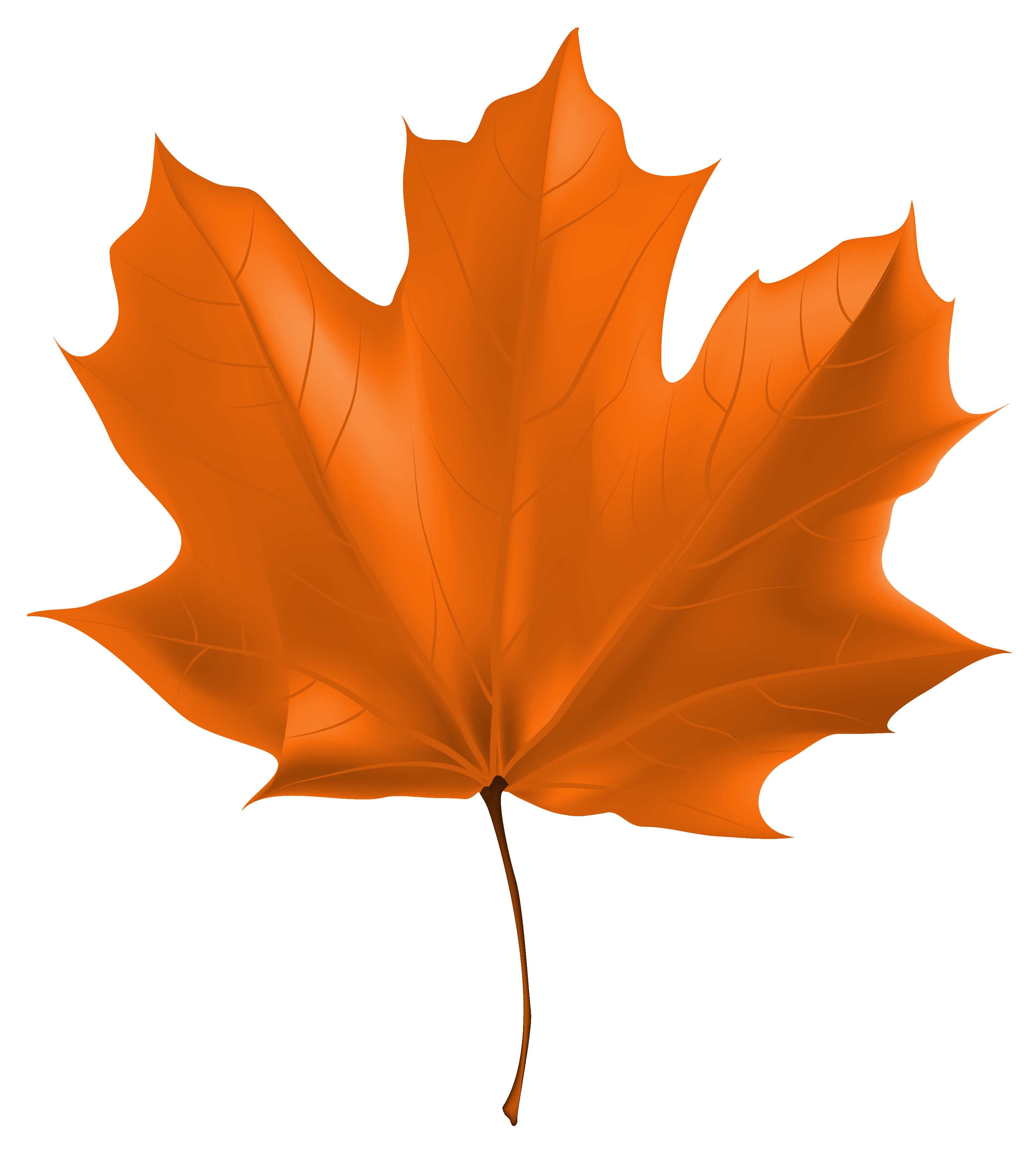 Fall leaf png. Beautiful autumn clipart image
