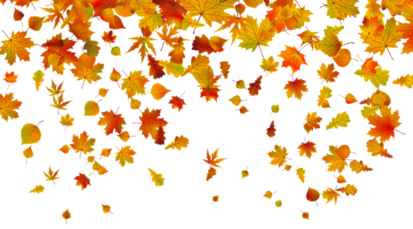 Fall leaves .png. Transparent png clipart image