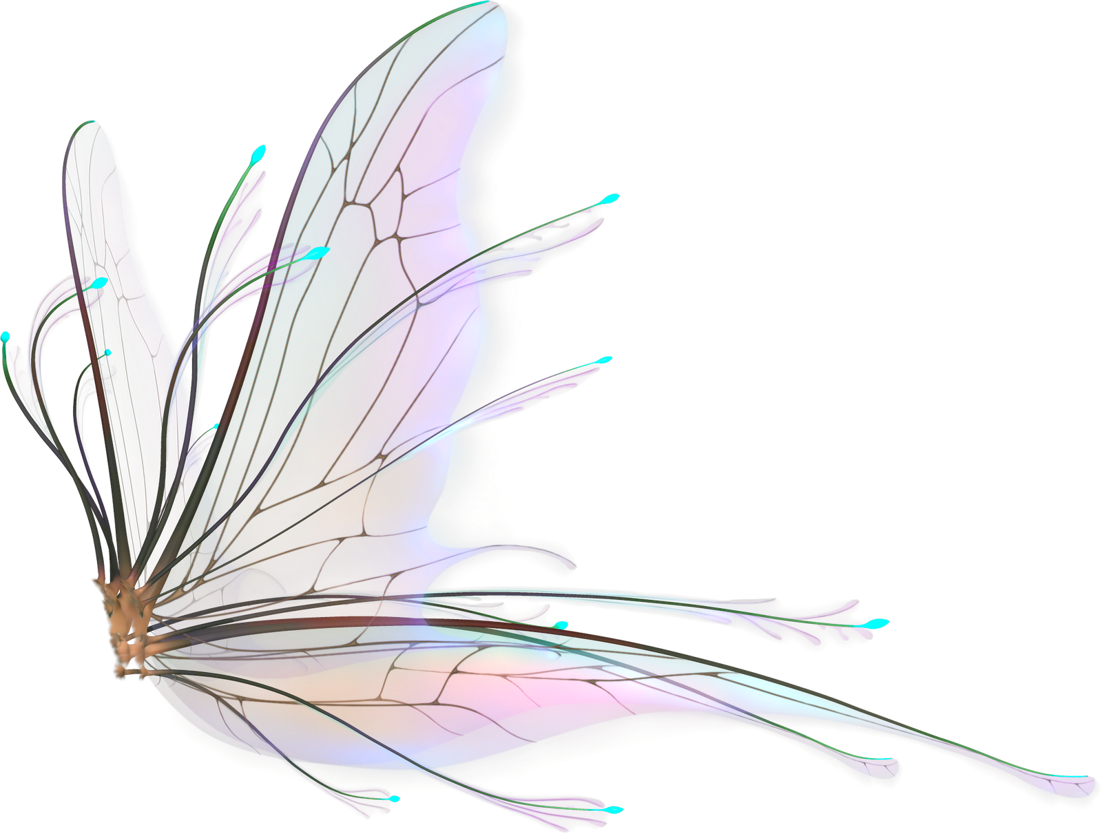 Gambar sayap format png. Fairy wings transparent pictures