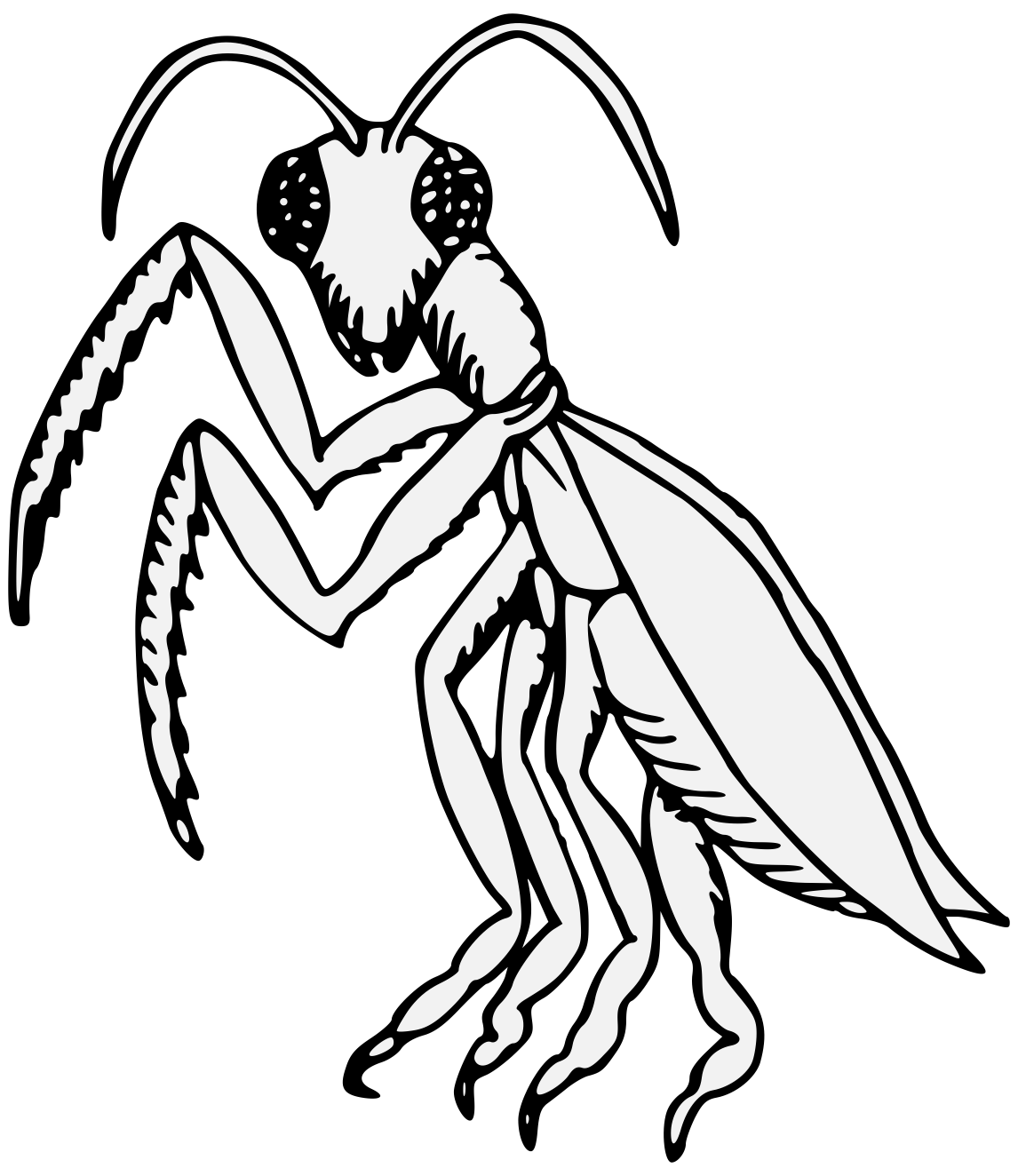 Gamora drawing line. Clip art insect illustration