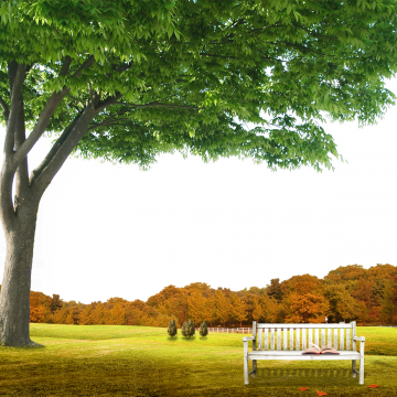 Garden background png. Images vectors and psd