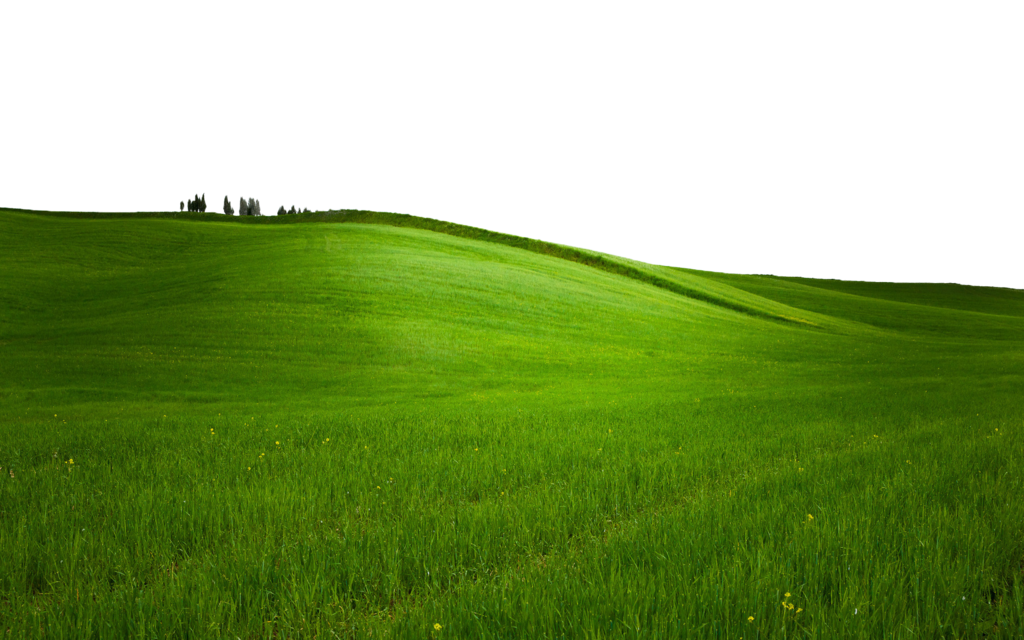 land vector green field