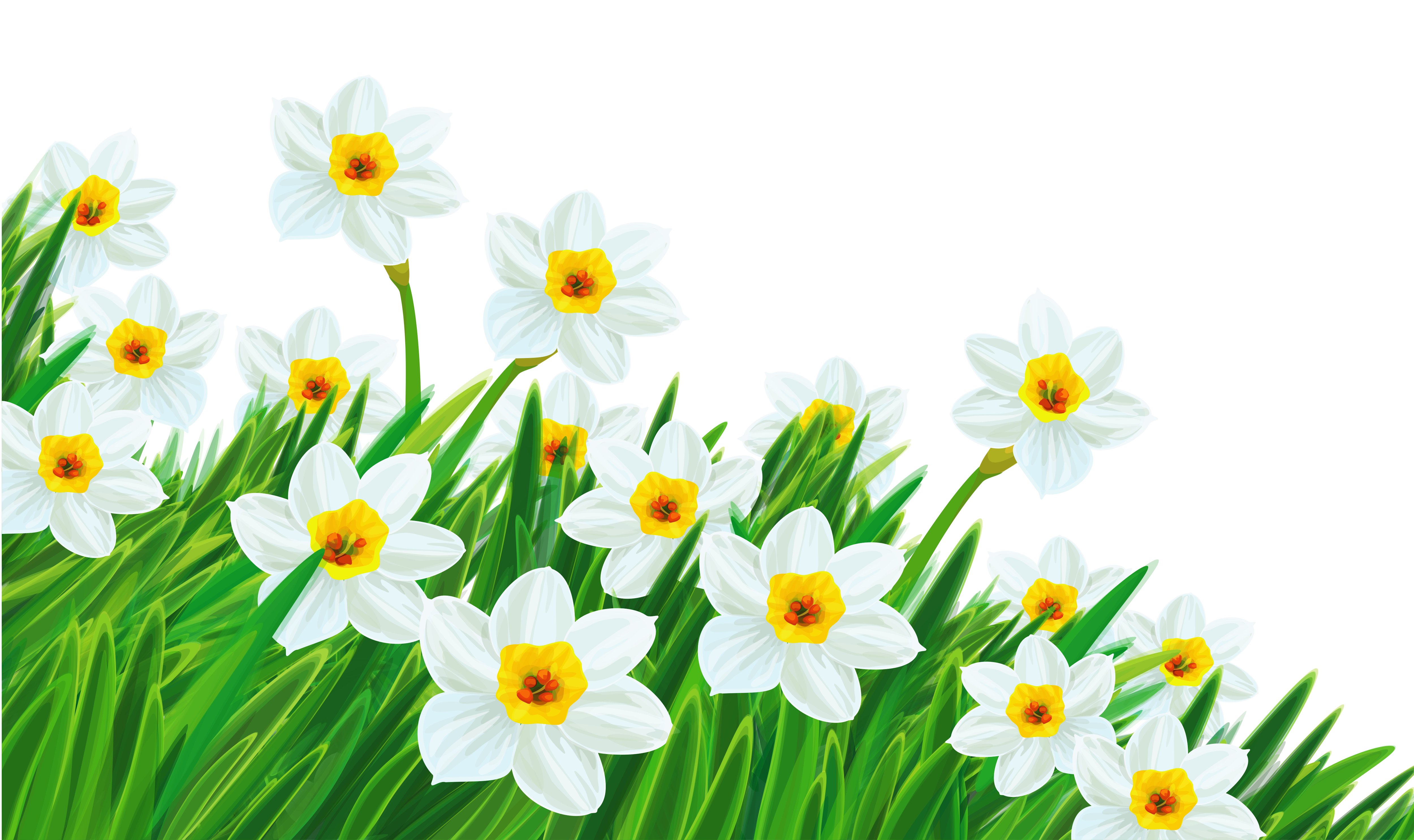 Nature clipart spring. Transparent grass with daffodils