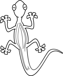 transparent gecko outline