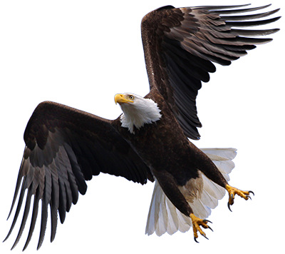 Hd transparent images pluspng. Eagle png picture library stock