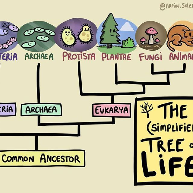 Germs clipart archaea. Phylogeny cartoon comics biology