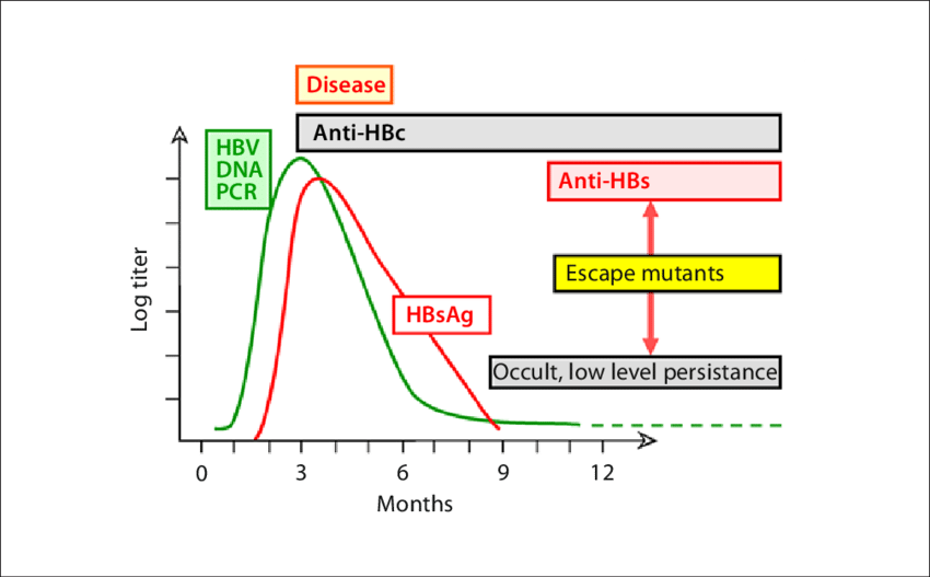 Gi drawing hepatitis b. Typical course of acute