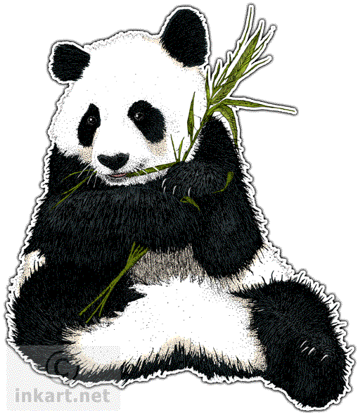 Giant panda png. Wildlife art endangered animals
