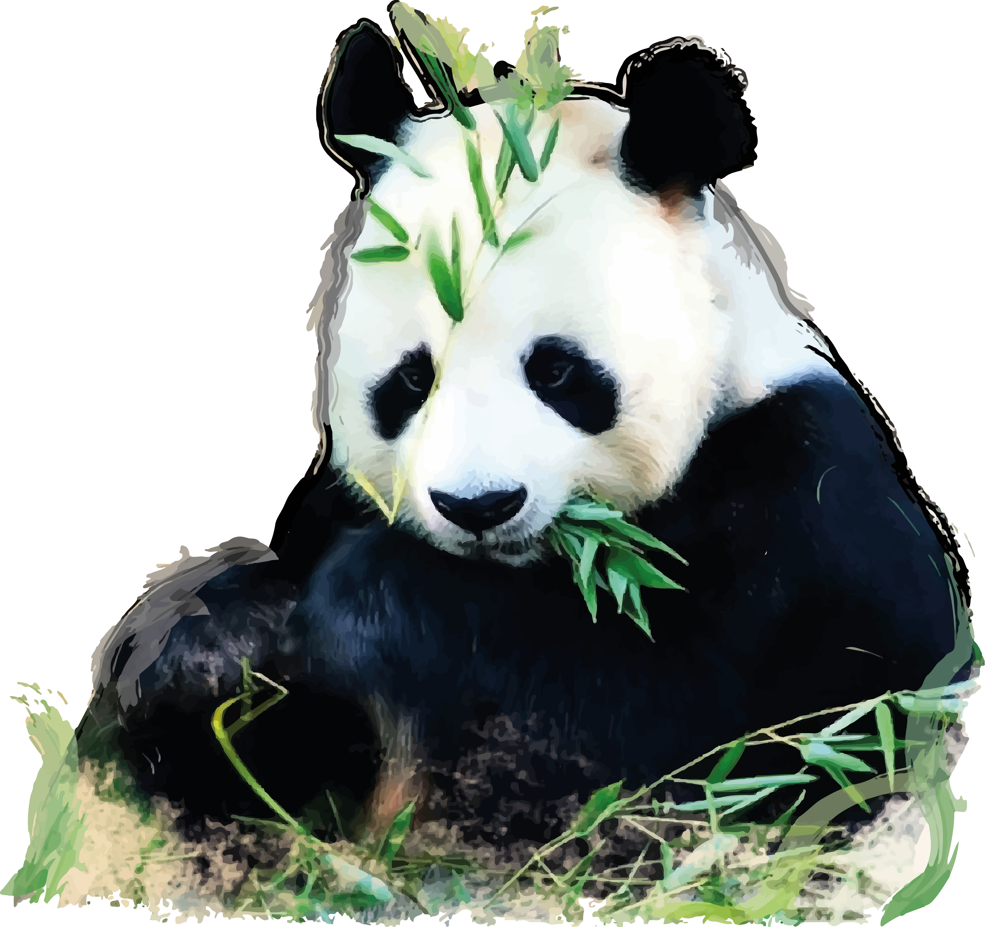 Giant panda png. China oso glogster edu