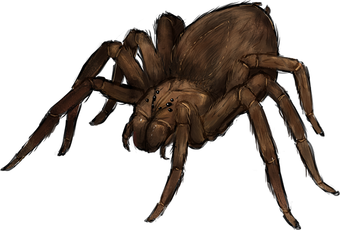 Giant spider png. Beast spiders medieval fantasy