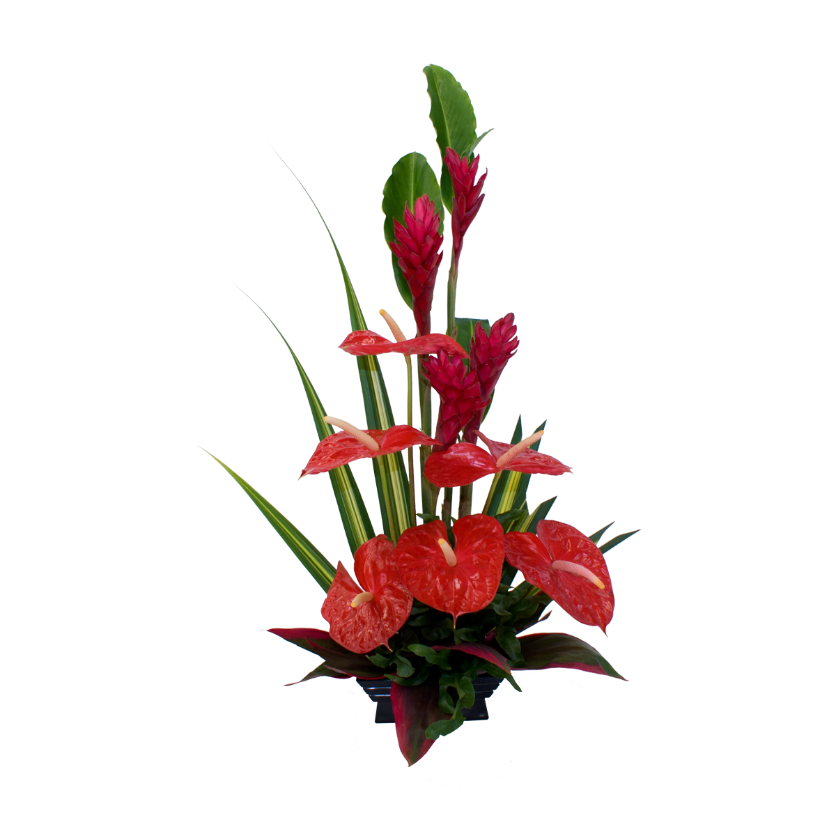 Ginger flower png. Red anthurium and hawaiian