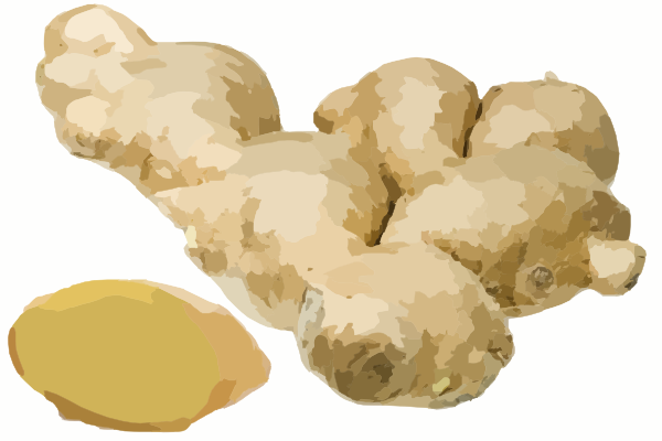 Ginger Root. Free cliparts download clip