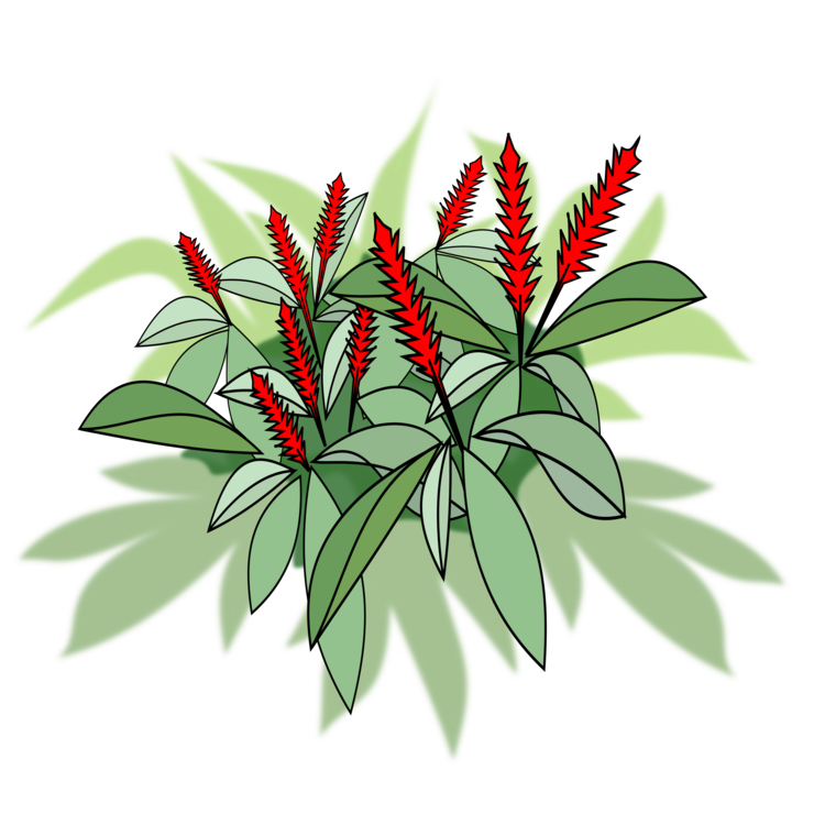 Ginger vector red. Plants computer icons flowering
