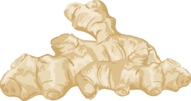 Ginger vector sketch. Clipart pencil and in