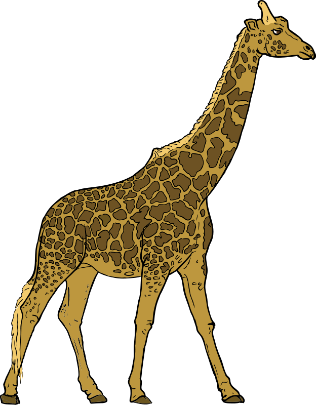 Girrafe drawing biro. Giraffe clipart zoo safari